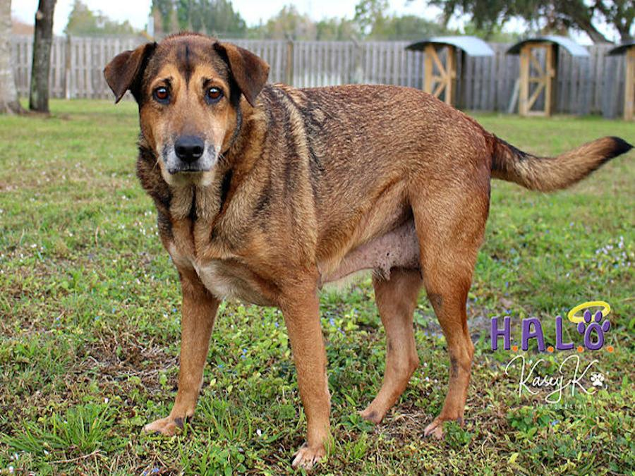 Dog for adoption Halo No-Kill rescue Sebastian Florida