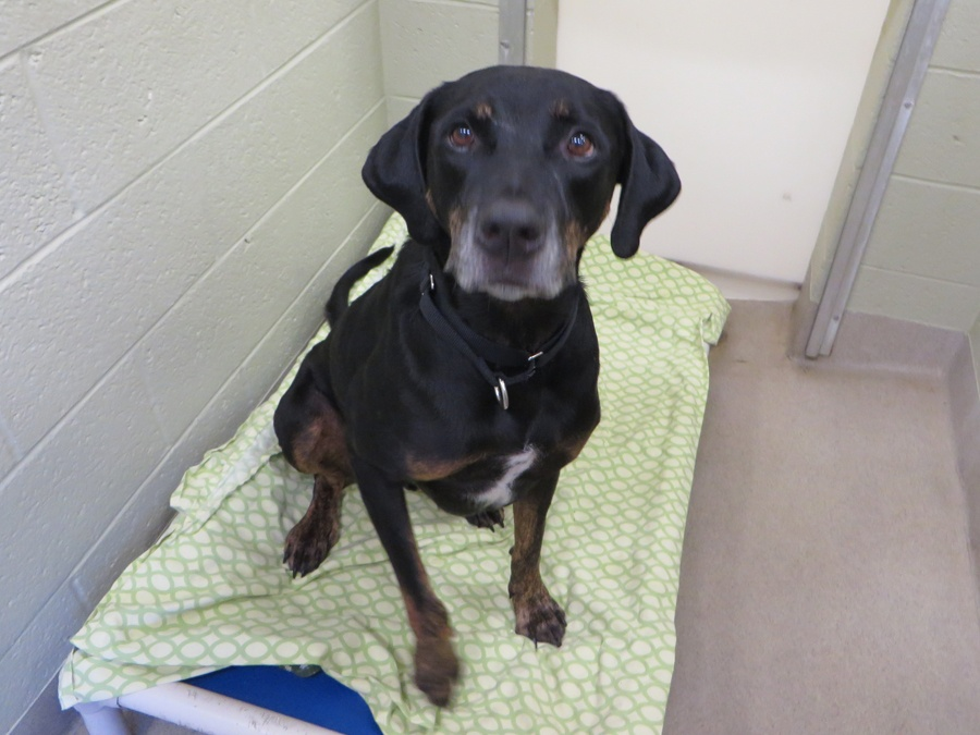 Dog for adoption Humane Society Vero Beach Florida