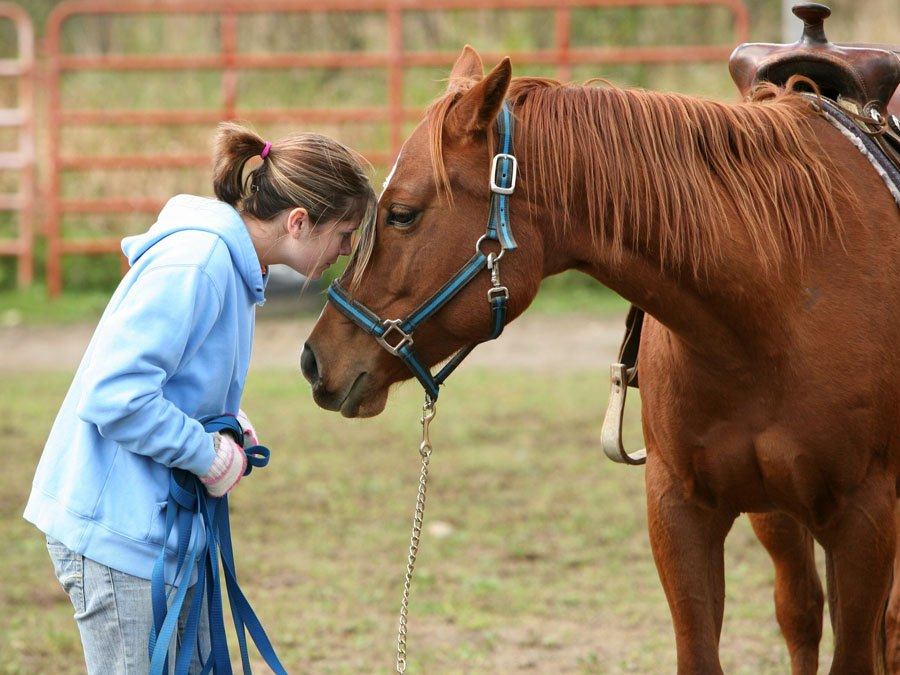 Participate in Equine Therapy at Beachside Rehab