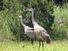 /images/business/Blue%20Herons%20900-6751_thumbnail.jpg