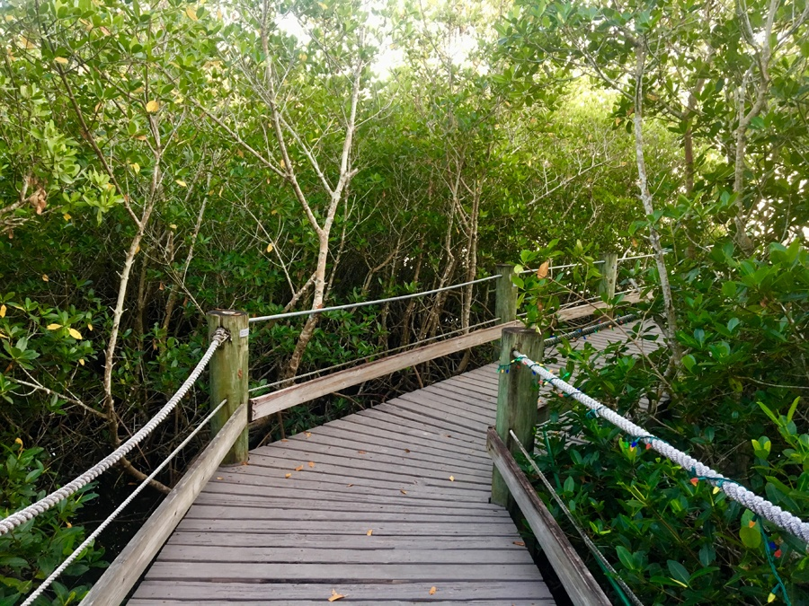 The boardwalk at the Environmental Learning Center Vero Beach Florida