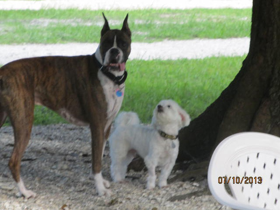 Dogs For Life, Inc. Vero Beach Florida small and large dogs in dog park