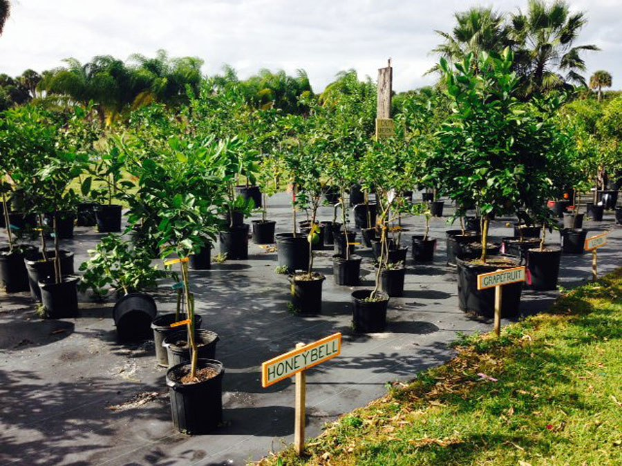 Peterson Groves - Indian River Citrus | VeroBeach.com