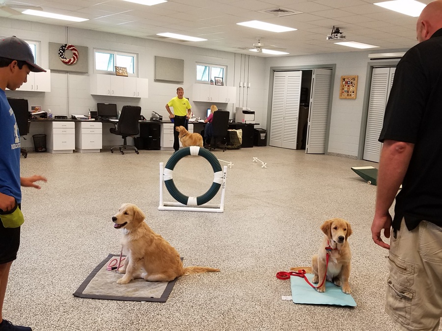 Dogs For Life, Inc. Vero Beach Florida training puppies