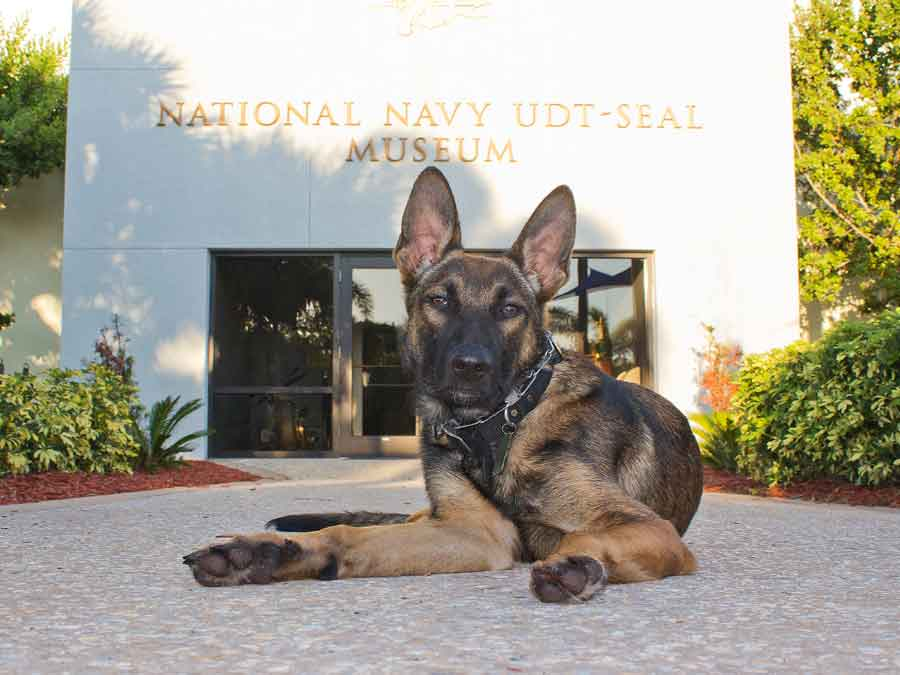 The National Navy UDT-SEAL Museum dog