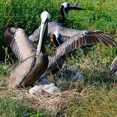 Pelican Island National Wildlife Refuge Vero Beach Florida