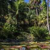 Lily pond at McKee Botanical Gardens Vero Beach Florida