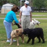 Dogs For Life, Inc. Vero Beach Florida dogs greeting each other in the dog park