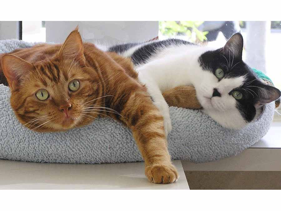 Two cats on cat bed