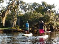 Indian River Mangrove Tour Sea Sup Go Vero Beach Florida